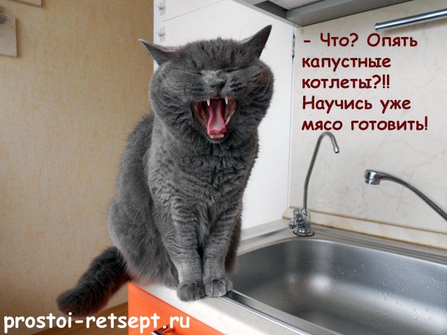 кот голодный
